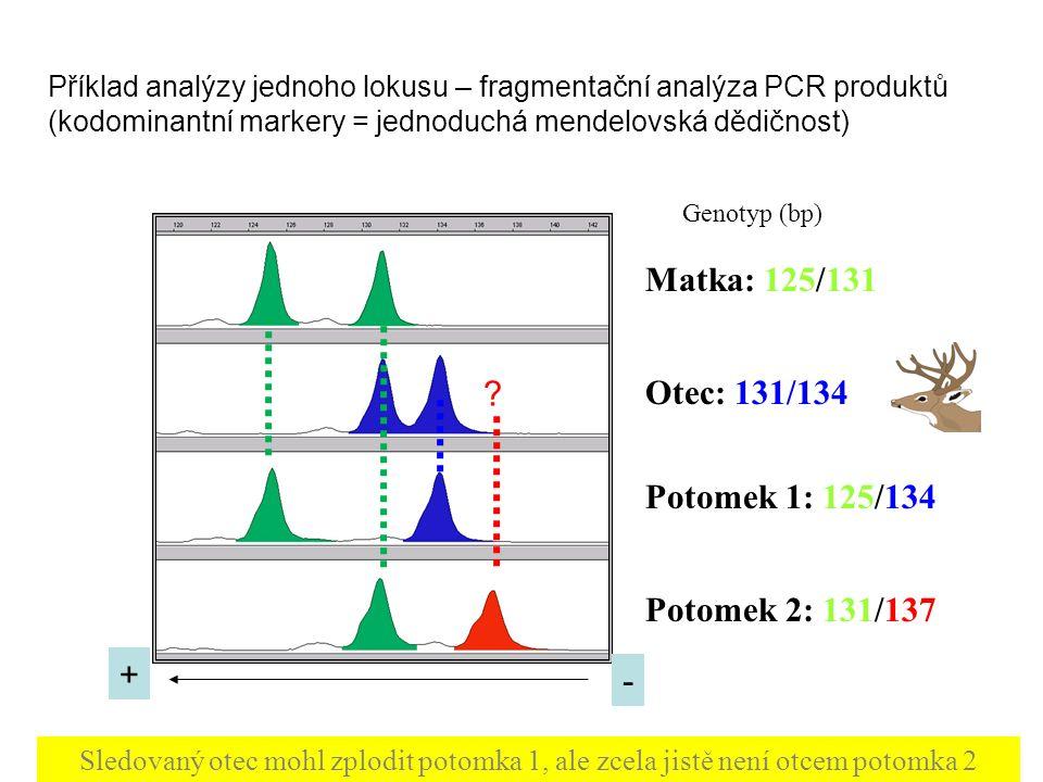 Genotypic (parental) reconstruction rekonstrukce parentálních genotypů z velkého množství genotypů potomků (full- or halfsibs) exhaustive algorithm extremely computationally intensive nejčastěji při analýzách paternity u ryb