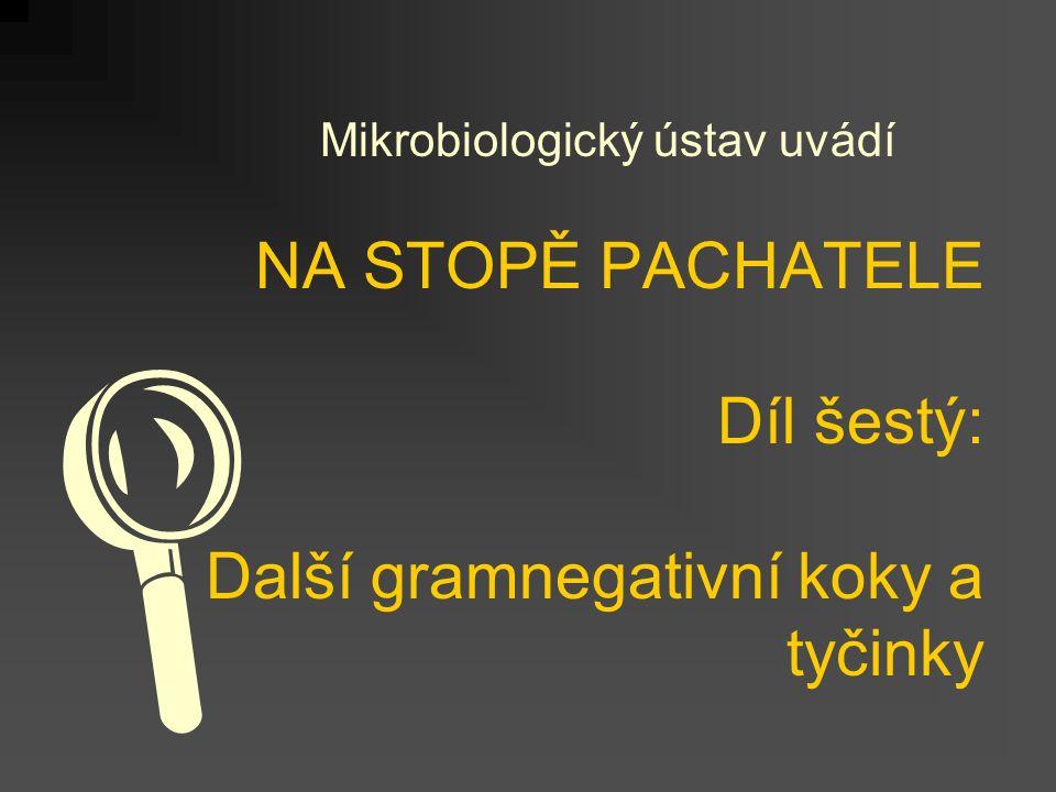 NA STOPĚ PACHATELE Díl šestý: Další gramnegativní koky a tyčinky Mikrobiologický ústav uvádí 