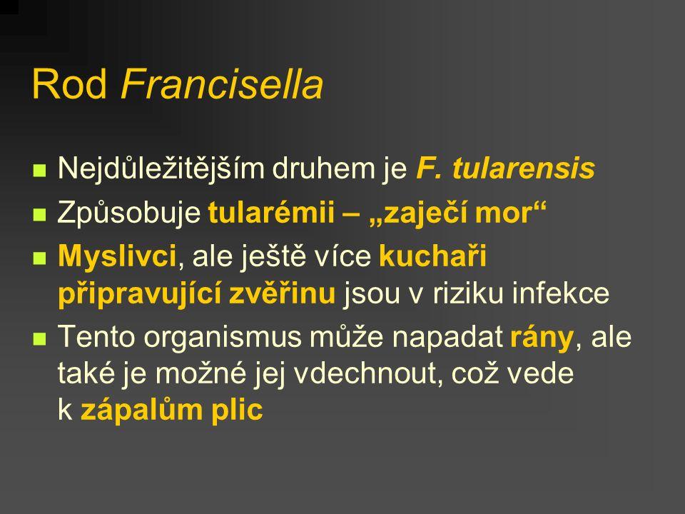 """Rod Francisella Nejdůležitějším druhem je F. tularensis Způsobuje tularémii – """"zaječí mor"""" Myslivci, ale ještě více kuchaři připravující zvěřinu jsou"""