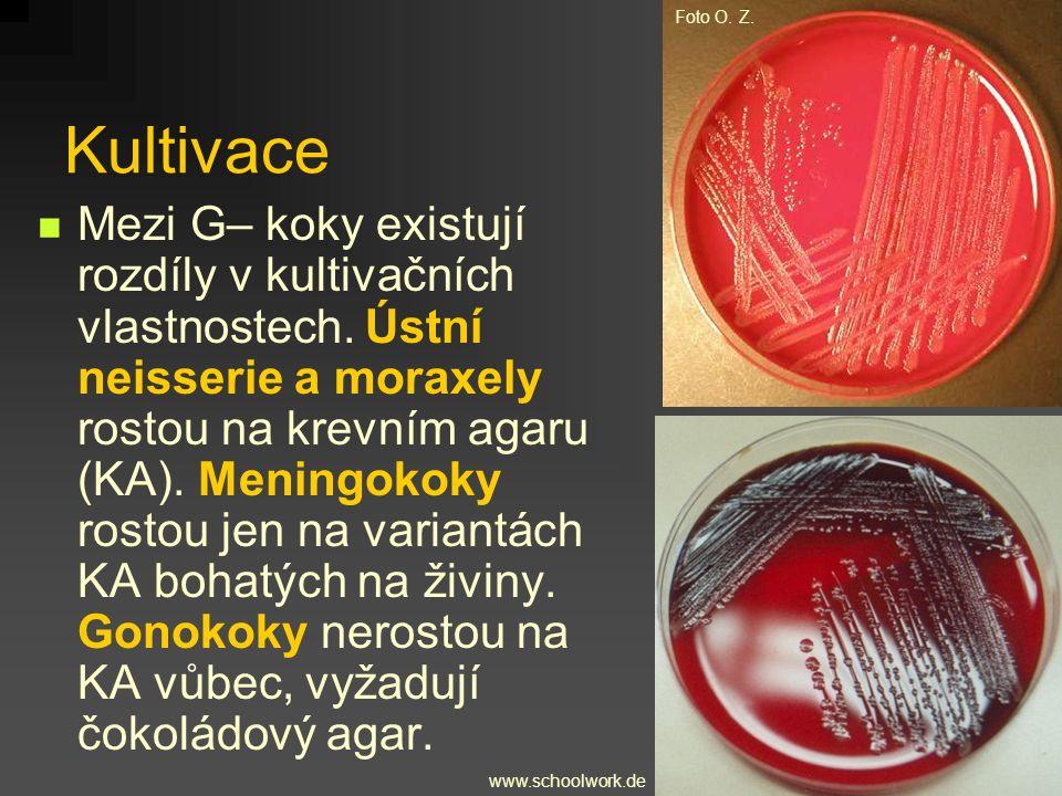 Kultivace www.schoolwork.de Foto O. Z. Mezi G– koky existují rozdíly v kultivačních vlastnostech. Ústní neisserie a moraxely rostou na krevním agaru (