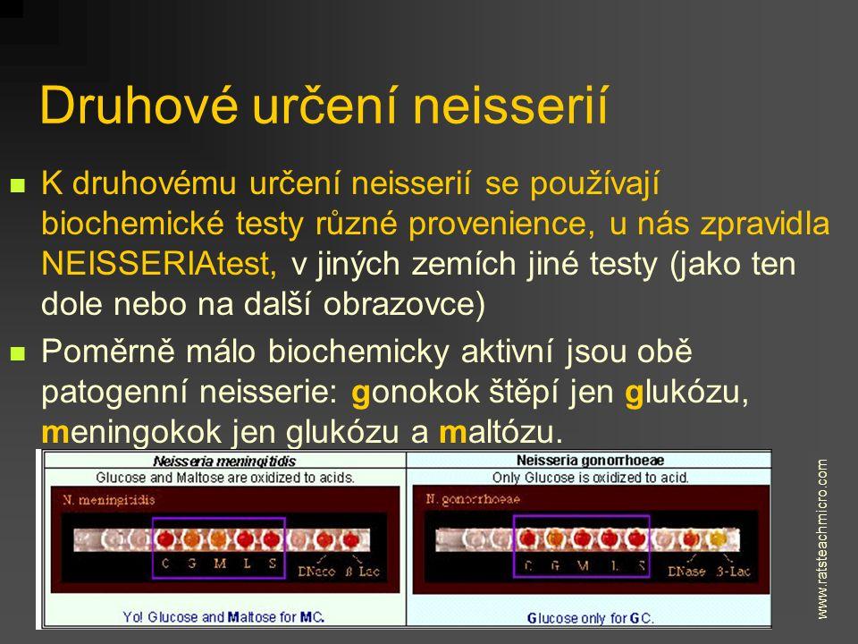 Druhové určení neisserií K druhovému určení neisserií se používají biochemické testy různé provenience, u nás zpravidla NEISSERIAtest, v jiných zemích