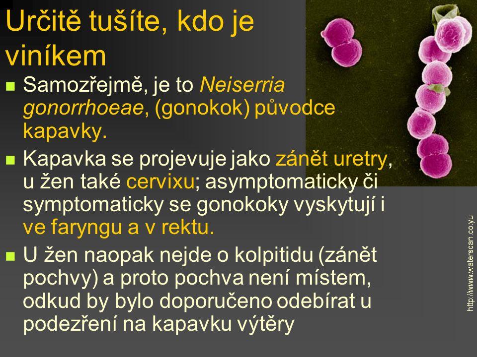Určitě tušíte, kdo je viníkem Samozřejmě, je to Neiserria gonorrhoeae, (gonokok) původce kapavky. Kapavka se projevuje jako zánět uretry, u žen také c