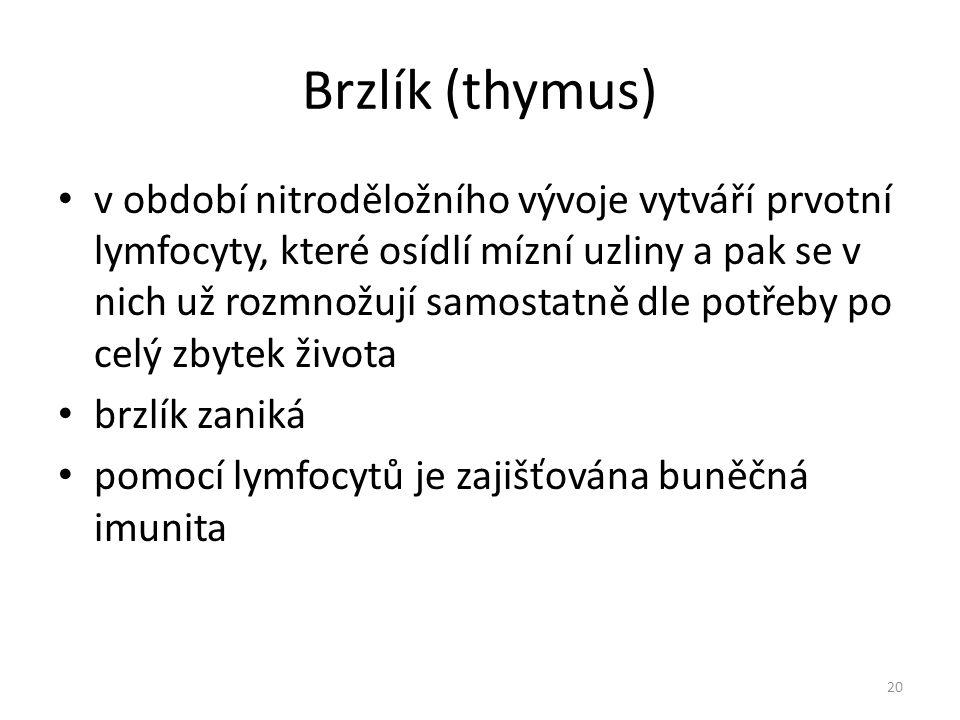 Brzlík (thymus) v období nitroděložního vývoje vytváří prvotní lymfocyty, které osídlí mízní uzliny a pak se v nich už rozmnožují samostatně dle potře
