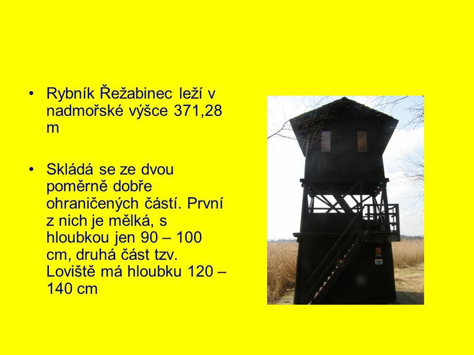 Rybník Řežabinec leží v nadmořské výšce 371,28 m Skládá se ze dvou poměrně dobře ohraničených částí. První z nich je mělká, s hloubkou jen 90 – 100 cm