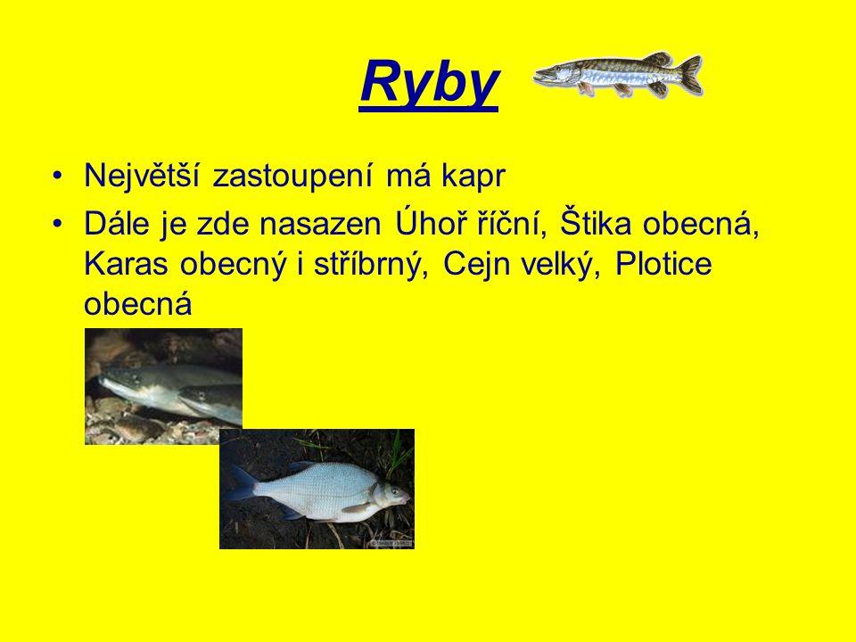 Ryby Největší zastoupení má kapr Dále je zde nasazen Úhoř říční, Štika obecná, Karas obecný i stříbrný, Cejn velký, Plotice obecná