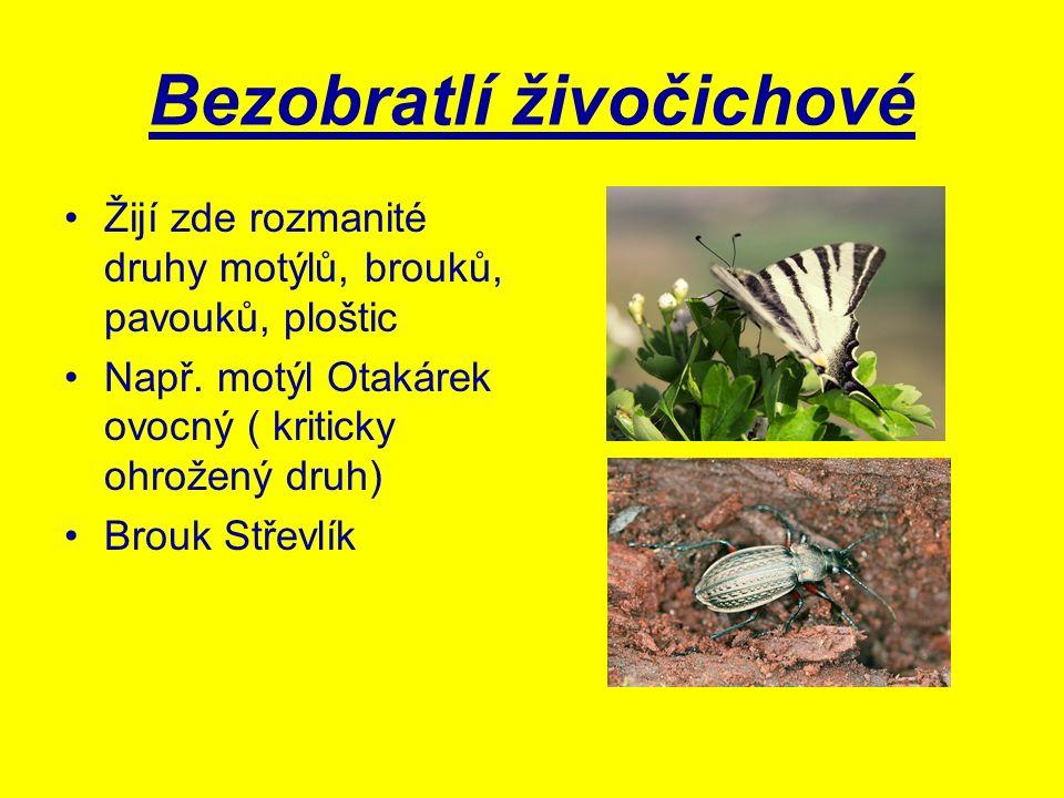 Bezobratlí živočichové Žijí zde rozmanité druhy motýlů, brouků, pavouků, ploštic Např. motýl Otakárek ovocný ( kriticky ohrožený druh) Brouk Střevlík