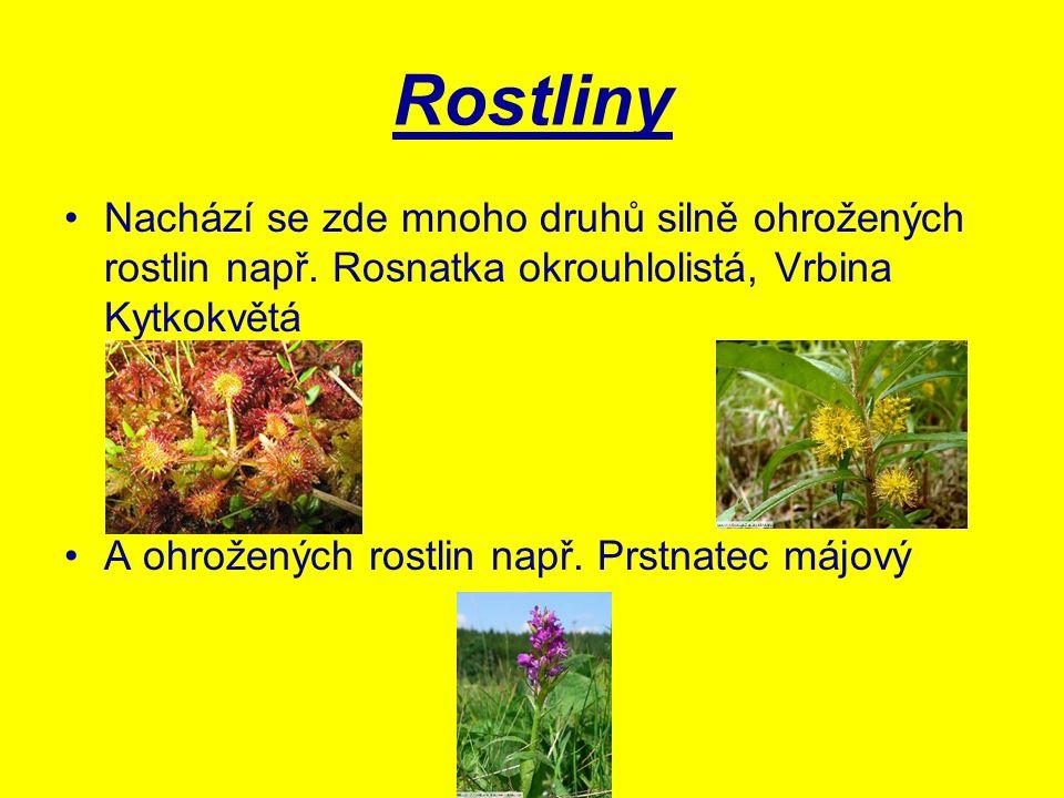 Rostliny Nachází se zde mnoho druhů silně ohrožených rostlin např. Rosnatka okrouhlolistá, Vrbina Kytkokvětá A ohrožených rostlin např. Prstnatec májo