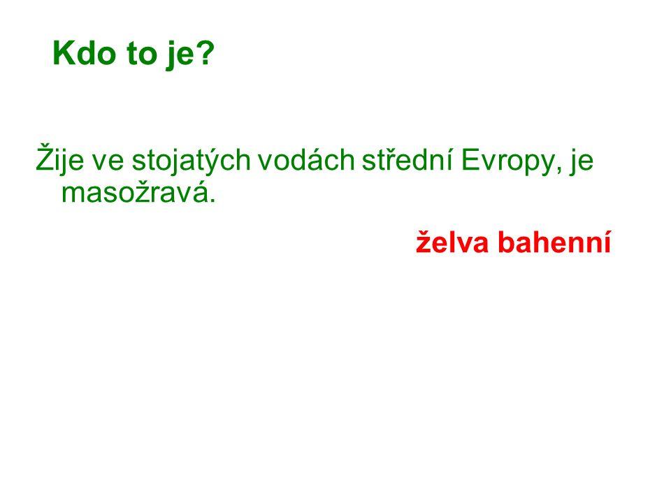 Kdo to je Žije ve stojatých vodách střední Evropy, je masožravá. želva bahenní