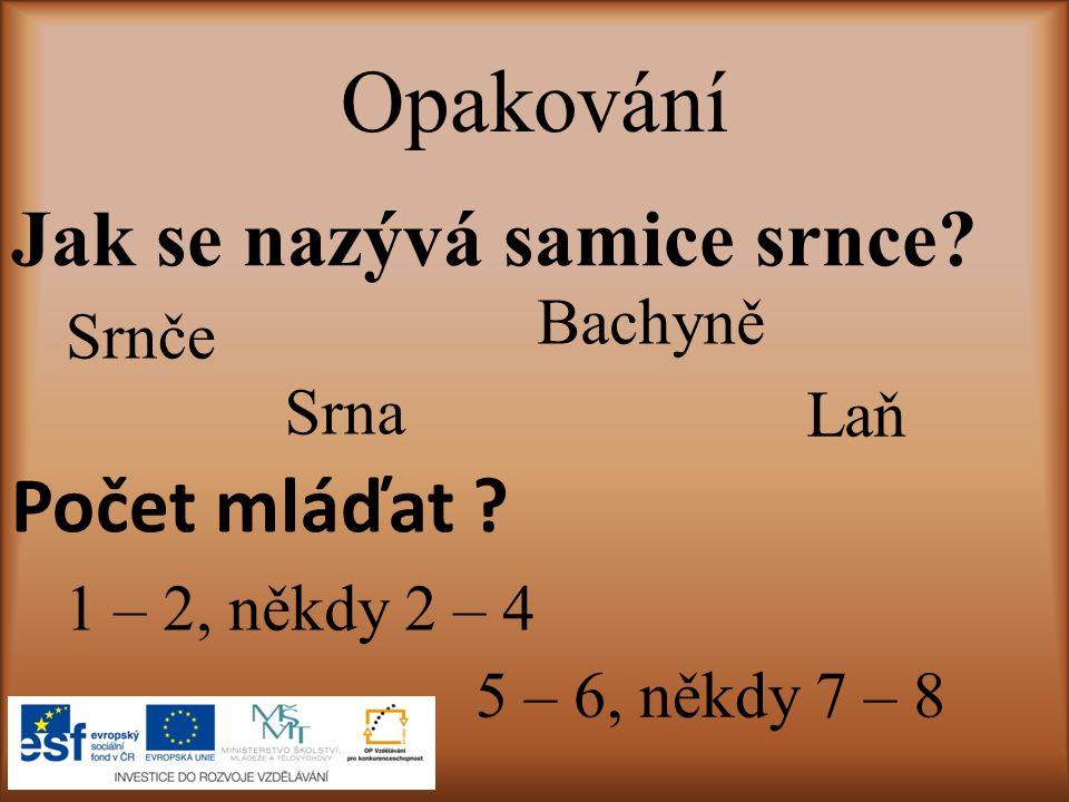 Opakování Jak se nazývá samice srnce.Srnče Laň Srna Bachyně Počet mláďat .