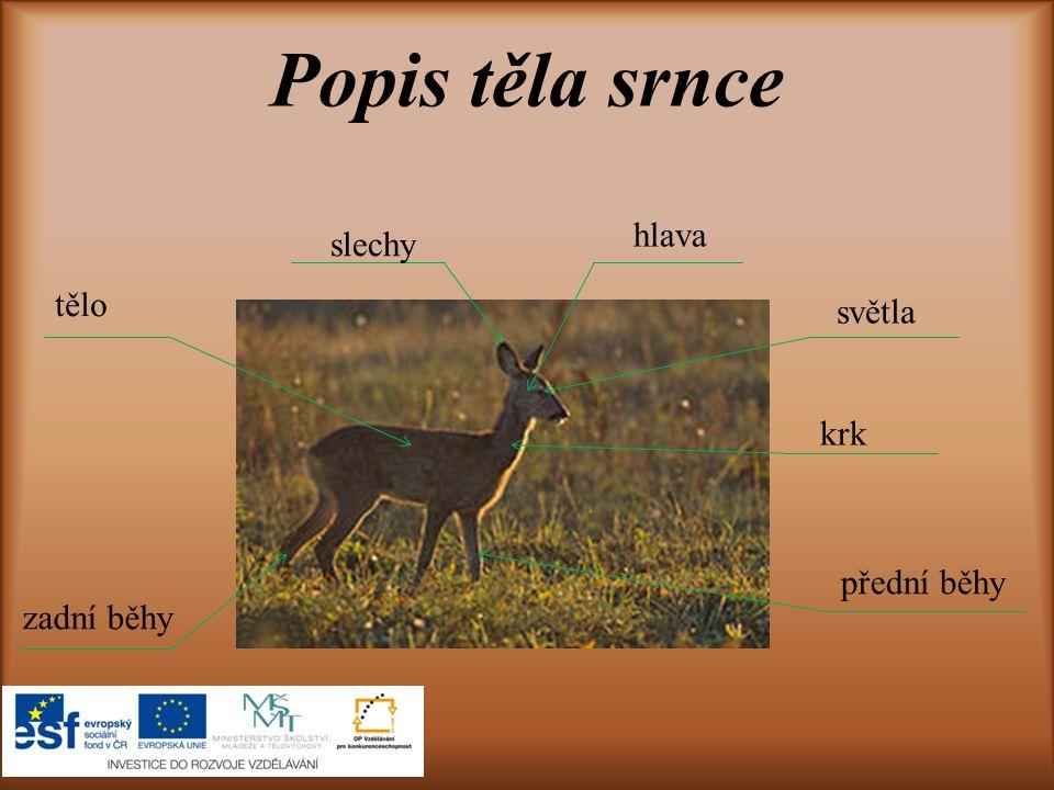 Jelenovití Způsob života Srnci patří do čeledě jelenovitých.