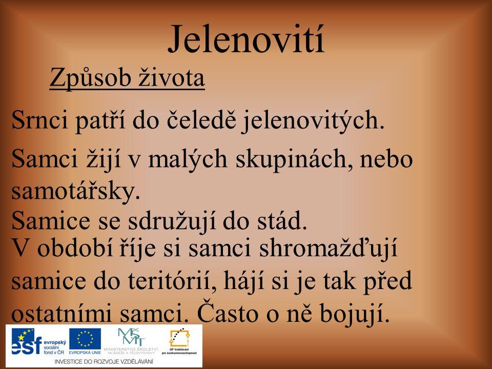 ČLOVĚK A JEHO SVĚT, Přírodověda pro 4.ročník. Štiková, Věra.