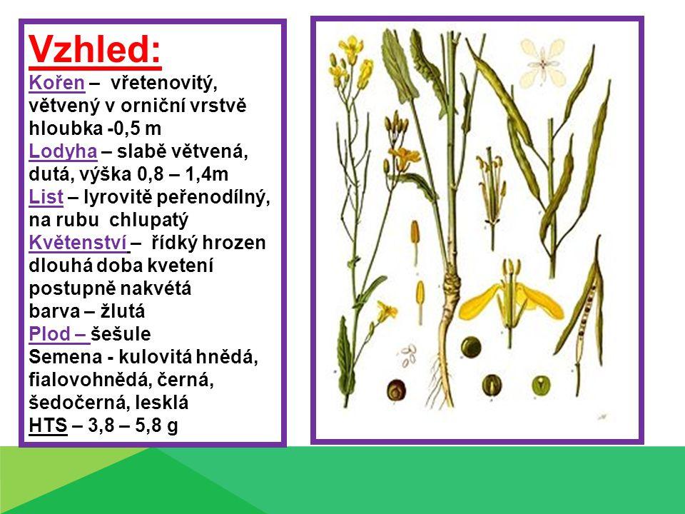Vzhled: Kořen – vřetenovitý, větvený v orniční vrstvě hloubka -0,5 m Lodyha – slabě větvená, dutá, výška 0,8 – 1,4m List – lyrovitě peřenodílný, na rubu chlupatý Květenství – řídký hrozen dlouhá doba kvetení postupně nakvétá barva – žlutá Plod – šešule Semena - kulovitá hnědá, fialovohnědá, černá, šedočerná, lesklá HTS – 3,8 – 5,8 g