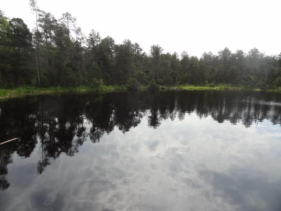 Rejvízské rašeliniště má dvě jádra, ve kterých se nacházejí rašelinná jezírka Velké a malé mechové jezírko. Každé vznikalo jinak, původně se jednalo o