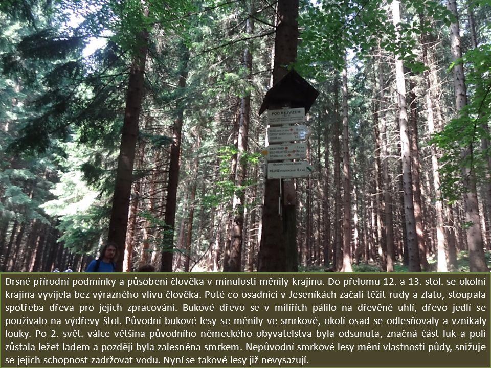 Mokřadní louky patří k tomu nejcennějšímu ve zdejší rezervaci. Vznikly v minulosti na vlhkých místech, kde lidé vykáceli lesy. Louky znovu nezarostly