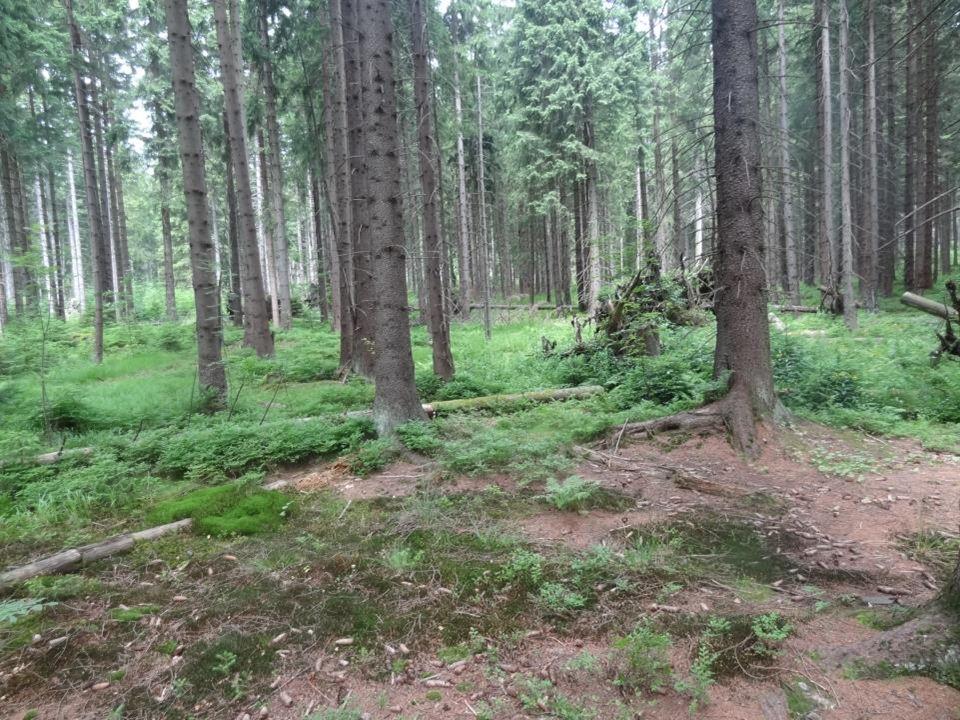 Na území rezervace je ponechána dřevní hmota k zetlení. Smrk má velmi mělké kořeny, proto dochází u smrčin rostoucích na podmáčených stanovištích čast