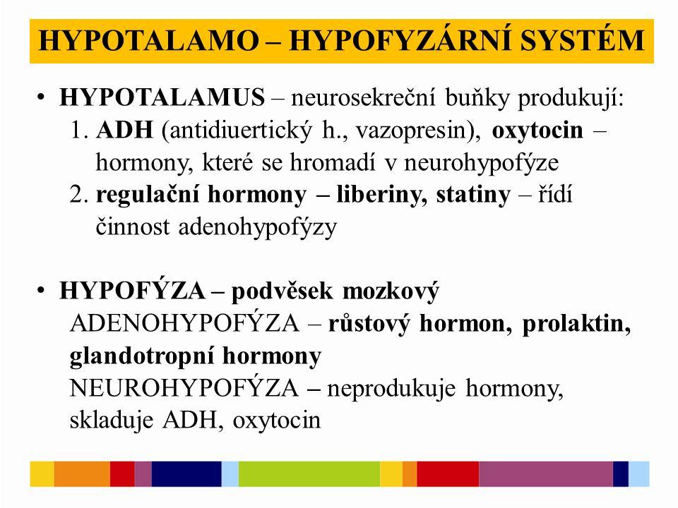 HYPOTALAMO – HYPOFYZÁRNÍ SYSTÉM HYPOTALAMUS – neurosekreční buňky produkují: 1. ADH (antidiuertický h., vazopresin), oxytocin – hormony, které se hrom