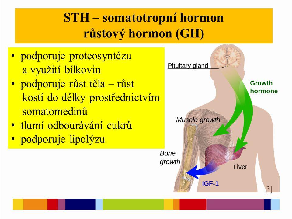 [3] STH – somatotropní hormon růstový hormon (GH) podporuje proteosyntézu a využití bílkovin podporuje růst těla – růst kostí do délky prostřednictvím