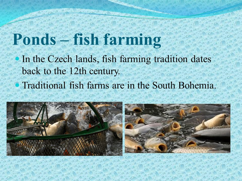 Ponds – fish farming In the Czech lands, fish farming tradition dates back to the 12th century.
