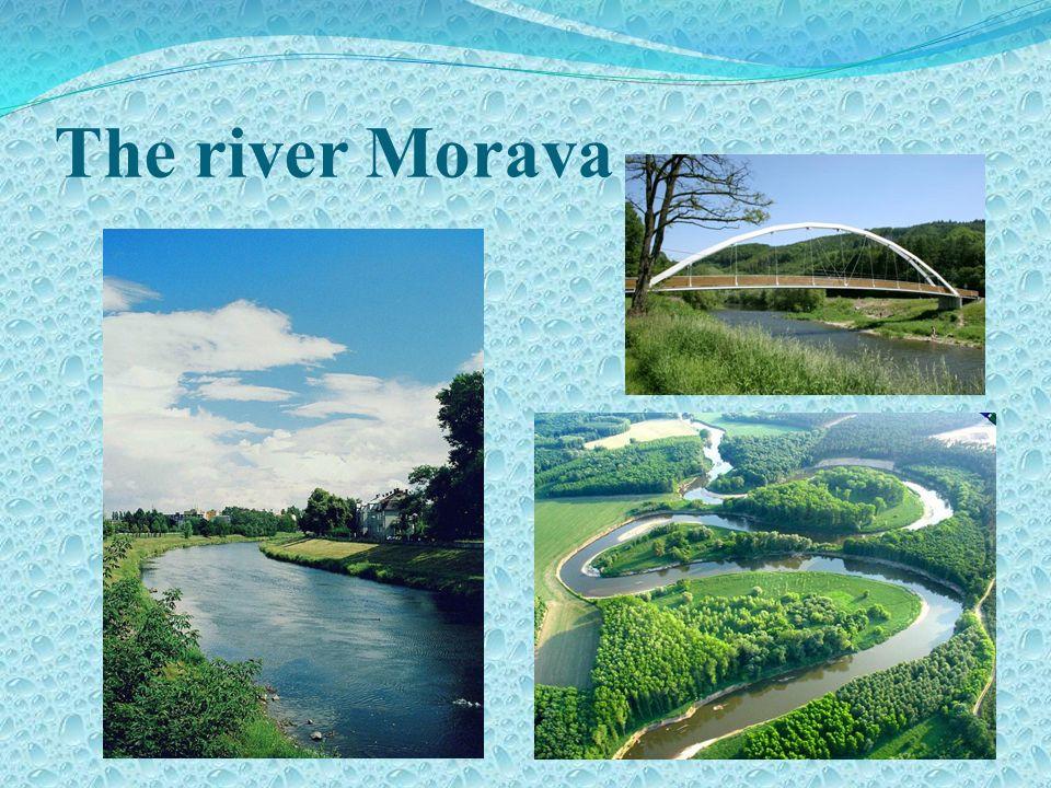 The river Morava