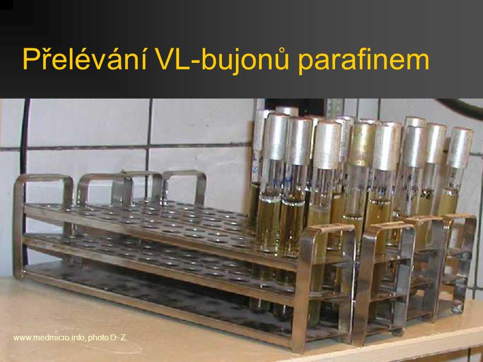 Přelévání VL-bujonů parafinem www.medmicro.info, photo O. Z.