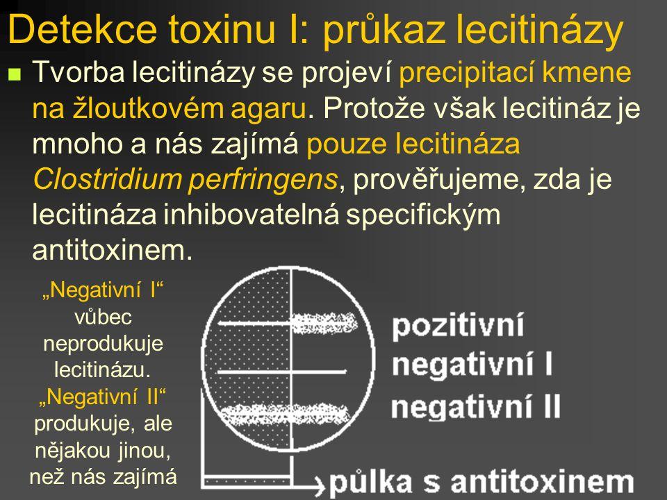 Detekce toxinu I: průkaz lecitinázy Tvorba lecitinázy se projeví precipitací kmene na žloutkovém agaru. Protože však lecitináz je mnoho a nás zajímá p