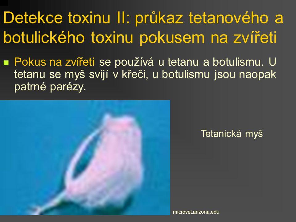 Detekce toxinu II: průkaz tetanového a botulického toxinu pokusem na zvířeti Pokus na zvířeti se používá u tetanu a botulismu. U tetanu se myš svíjí v