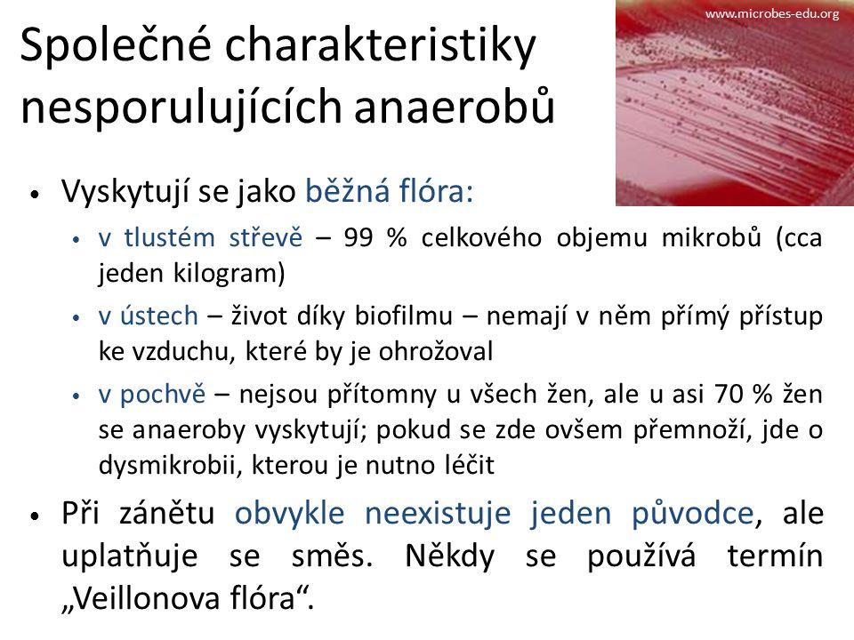 Společné charakteristiky nesporulujících anaerobů Vyskytují se jako běžná flóra: v tlustém střevě – 99 % celkového objemu mikrobů (cca jeden kilogram) v ústech – život díky biofilmu – nemají v něm přímý přístup ke vzduchu, které by je ohrožoval v pochvě – nejsou přítomny u všech žen, ale u asi 70 % žen se anaeroby vyskytují; pokud se zde ovšem přemnoží, jde o dysmikrobii, kterou je nutno léčit Při zánětu obvykle neexistuje jeden původce, ale uplatňuje se směs.