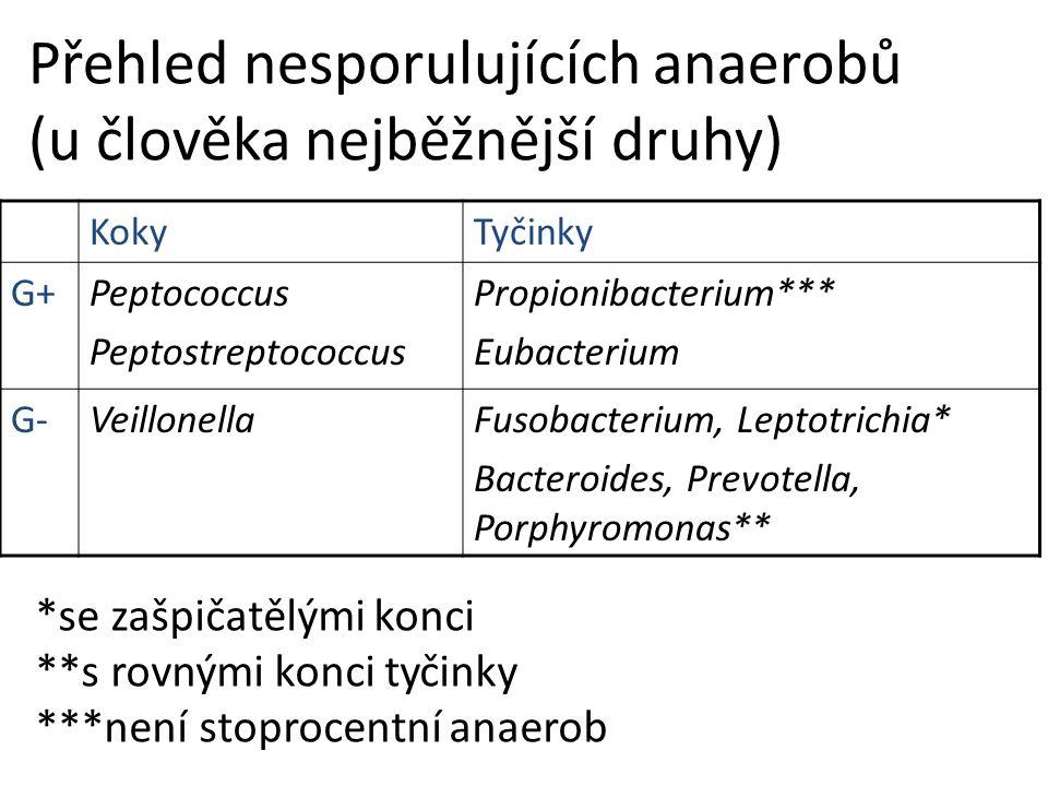 Přehled nesporulujících anaerobů (u člověka nejběžnější druhy) KokyTyčinky G+Peptococcus Peptostreptococcus Propionibacterium*** Eubacterium G-VeillonellaFusobacterium, Leptotrichia* Bacteroides, Prevotella, Porphyromonas** *se zašpičatělými konci **s rovnými konci tyčinky ***není stoprocentní anaerob