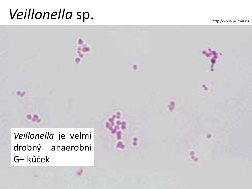 Veillonella sp. http://www.primer.ru Veillonella je velmi drobný anaerobní G– kůček