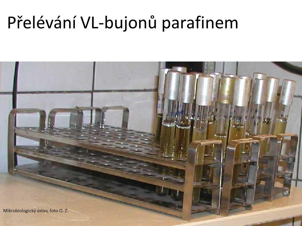 Přelévání VL-bujonů parafinem Mikrobiologický ústav, foto O. Z.