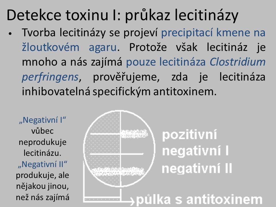 Detekce toxinu I: průkaz lecitinázy Tvorba lecitinázy se projeví precipitací kmene na žloutkovém agaru.