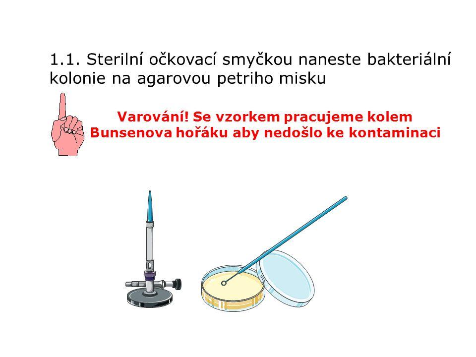 1.1. Sterilní očkovací smyčkou naneste bakteriální kolonie na agarovou petriho misku Varování.