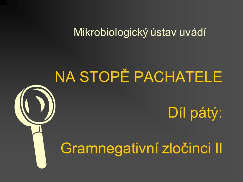 NA STOPĚ PACHATELE Díl pátý: Gramnegativní zločinci II Mikrobiologický ústav uvádí 