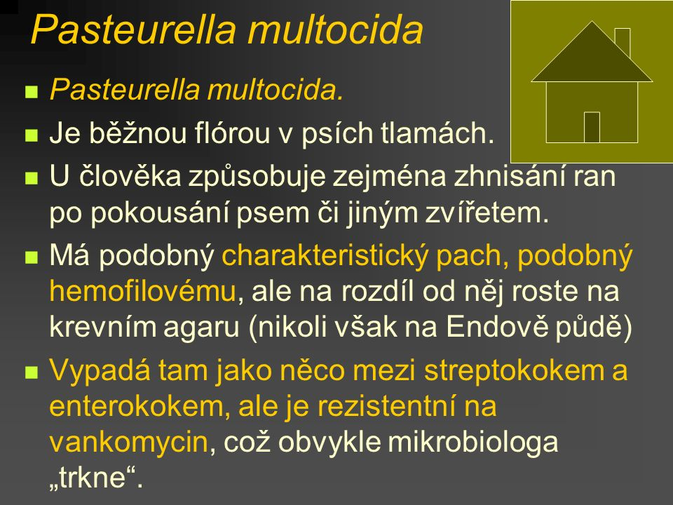 Pasteurella multocida Pasteurella multocida. Je běžnou flórou v psích tlamách. U člověka způsobuje zejména zhnisání ran po pokousání psem či jiným zví