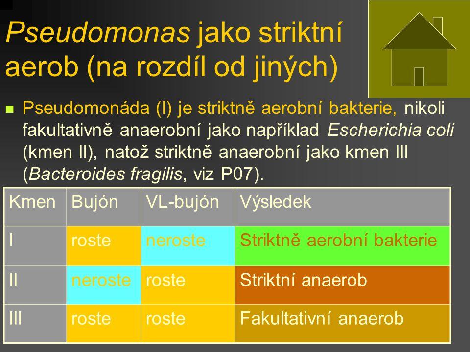 Pseudomonas jako striktní aerob (na rozdíl od jiných) Pseudomonáda (I) je striktně aerobní bakterie, nikoli fakultativně anaerobní jako například Escherichia coli (kmen II), natož striktně anaerobní jako kmen III (Bacteroides fragilis, viz P07).