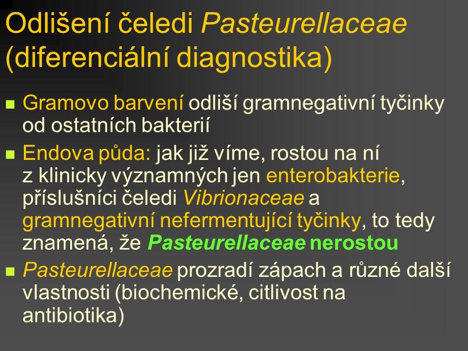 Odlišení čeledi Pasteurellaceae (diferenciální diagnostika) Gramovo barvení odliší gramnegativní tyčinky od ostatních bakterií Endova půda: jak již víme, rostou na ní z klinicky významných jen enterobakterie, příslušníci čeledi Vibrionaceae a gramnegativní nefermentující tyčinky, to tedy znamená, že Pasteurellaceae nerostou Pasteurellaceae prozradí zápach a různé další vlastnosti (biochemické, citlivost na antibiotika)