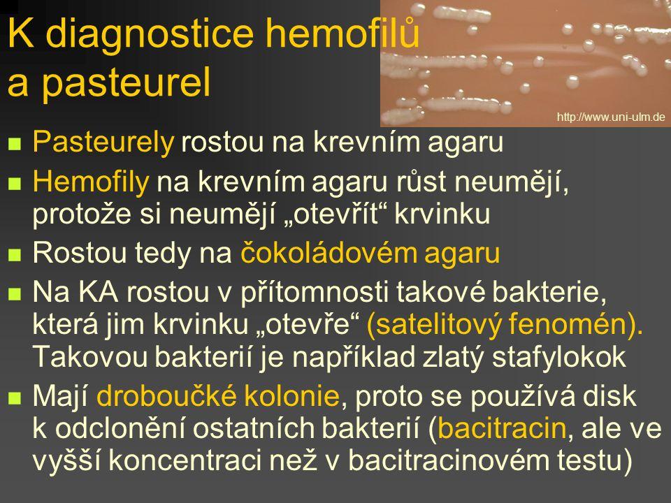 """K diagnostice hemofilů a pasteurel Pasteurely rostou na krevním agaru Hemofily na krevním agaru růst neumějí, protože si neumějí """"otevřít"""" krvinku Ros"""