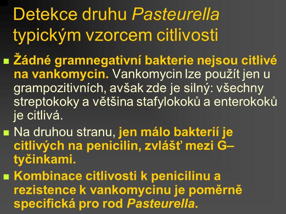 Detekce druhu Pasteurella typickým vzorcem citlivosti Žádné gramnegativní bakterie nejsou citlivé na vankomycin. Vankomycin lze použít jen u grampozit