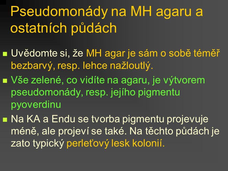 Pseudomonády na MH agaru a ostatních půdách Uvědomte si, že MH agar je sám o sobě téměř bezbarvý, resp.