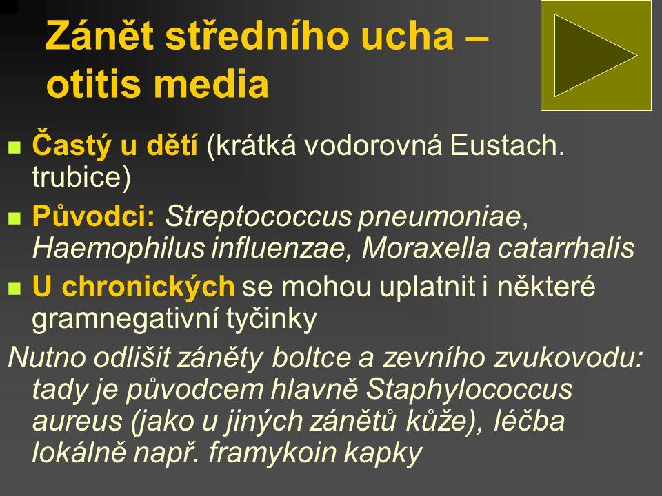 Zánět středního ucha – otitis media Častý u dětí (krátká vodorovná Eustach. trubice) Původci: Streptococcus pneumoniae, Haemophilus influenzae, Moraxe