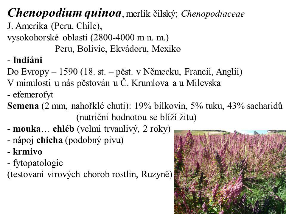 Chenopodium quinoa, merlík čilský; Chenopodiaceae J. Amerika (Peru, Chile), vysokohorské oblasti (2800-4000 m n. m.) Peru, Bolívie, Ekvádoru, Mexiko -