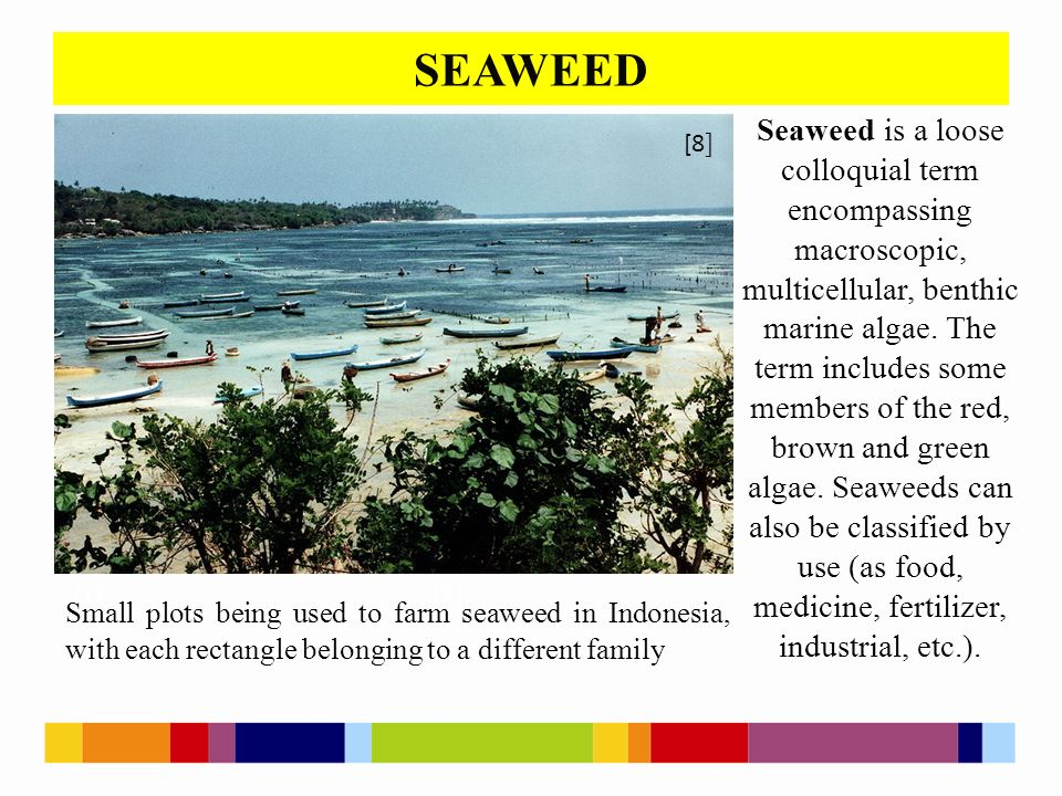 SEAWEED [1 ] [2 ] [4 ] Small plots being used to farm seaweed in Indonesia, with each rectangle belonging to a different family Seaweed is a loose colloquial term encompassing macroscopic, multicellular, benthic marine algae.