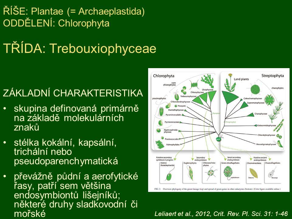ŘÍŠE: Plantae (= Archaeplastida) ODDĚLENÍ: Chlorophyta TŘÍDA: Trebouxiophyceae ZÁKLADNÍ CHARAKTERISTIKA skupina definovaná primárně na základě molekulárních znaků stélka kokální, kapsální, trichální nebo pseudoparenchymatická převážně půdní a aerofytické řasy, patří sem většina endosymbiontů lišejníků; některé druhy sladkovodní či mořské Leliaert et al., 2012, Crit.