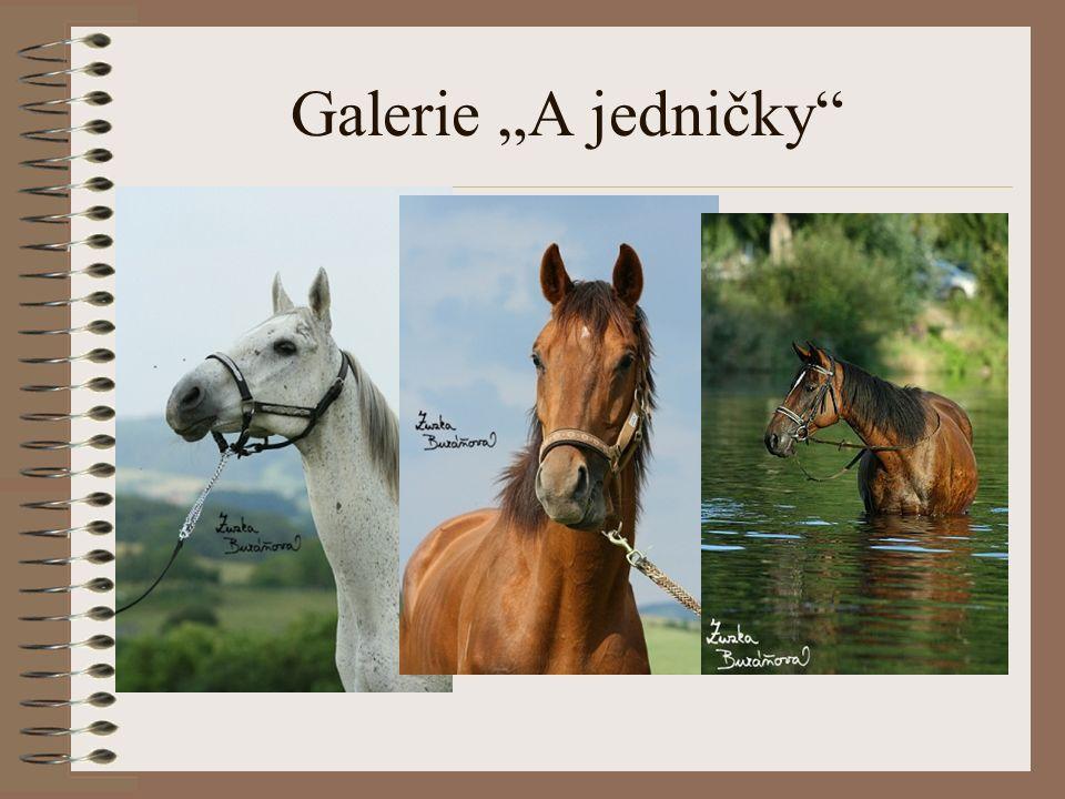 "Galerie ""A jedničky"""