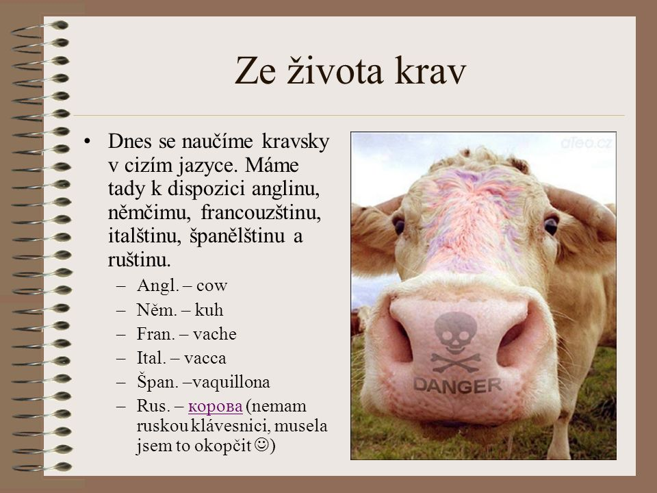 Ze života krav Dnes se naučíme kravsky v cizím jazyce. Máme tady k dispozici anglinu, němčimu, francouzštinu, italštinu, španělštinu a ruštinu. –Angl.