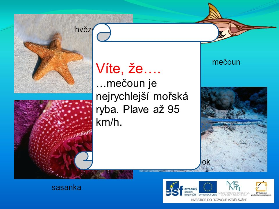 hvězdice mečoun rejnok sasanka Víte, že…. …mečoun je nejrychlejší mořská ryba. Plave až 95 km/h.