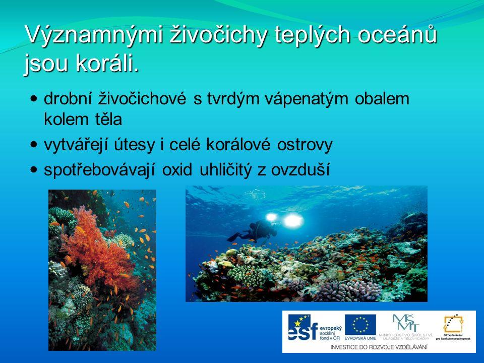 Významnými živočichy teplých oceánů jsou koráli. drobní živočichové s tvrdým vápenatým obalem kolem těla vytvářejí útesy i celé korálové ostrovy spotř