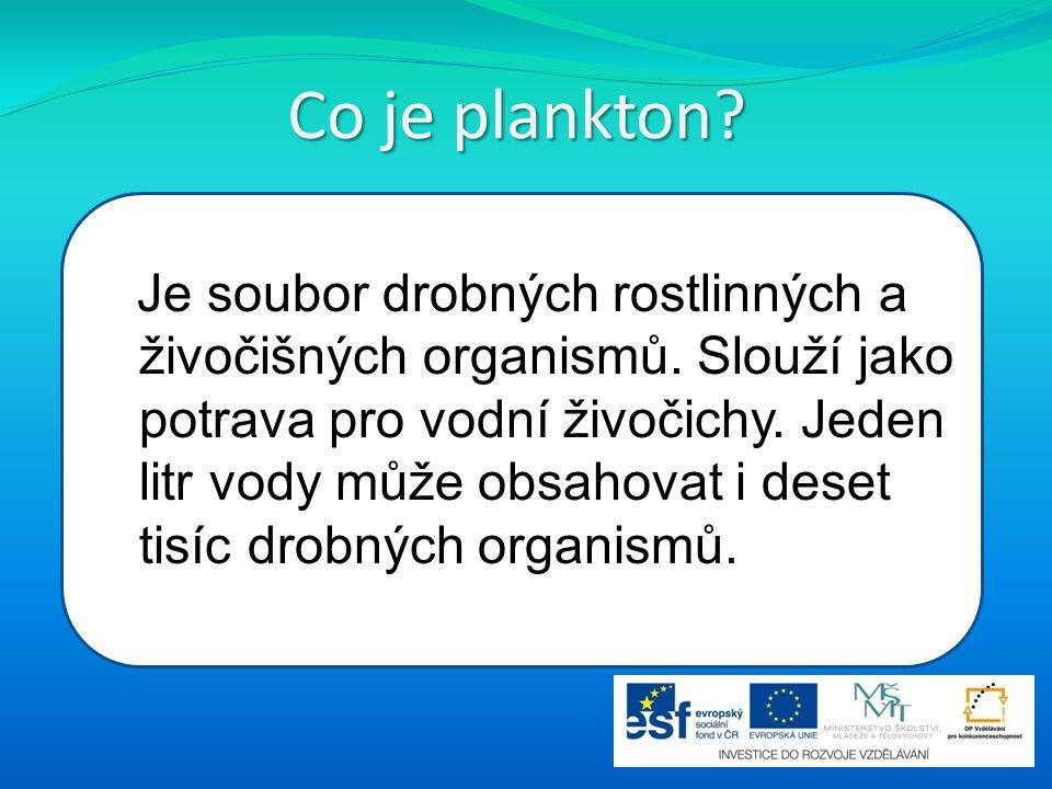 Co je plankton? Je soubor drobných rostlinných a živočišných organismů. Slouží jako potrava pro vodní živočichy. Jeden litr vody může obsahovat i dese