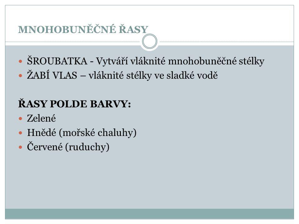 MNOHOBUNĚČNÉ ŘASY ŠROUBATKA - Vytváří vláknité mnohobuněčné stélky ŽABÍ VLAS – vláknité stélky ve sladké vodě ŘASY POLDE BARVY: Zelené Hnědé (mořské c