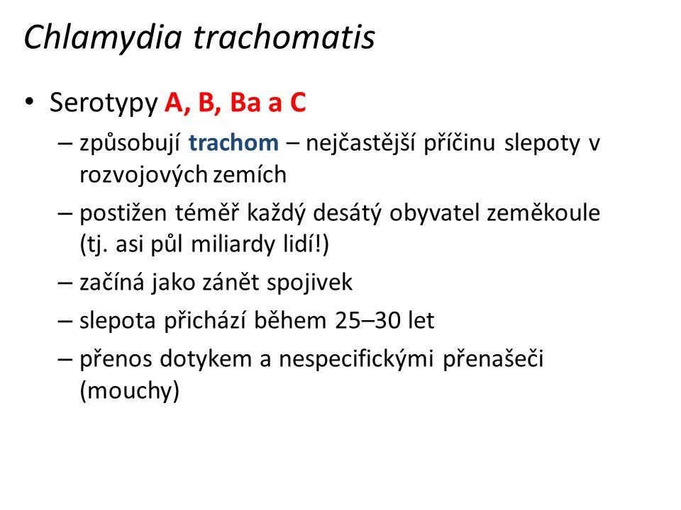 Chlamydia trachomatis Serotypy A, B, Ba a C – způsobují trachom – nejčastější příčinu slepoty v rozvojových zemích – postižen téměř každý desátý obyvatel zeměkoule (tj.